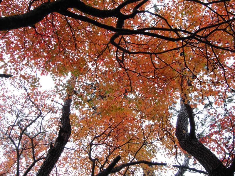 森の散歩道の画像