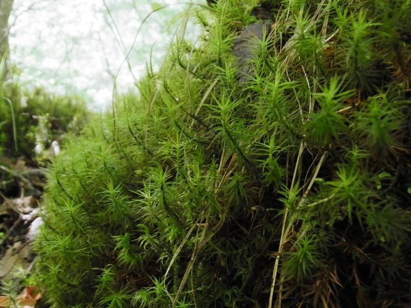天然炭酸水を育てる森の画像