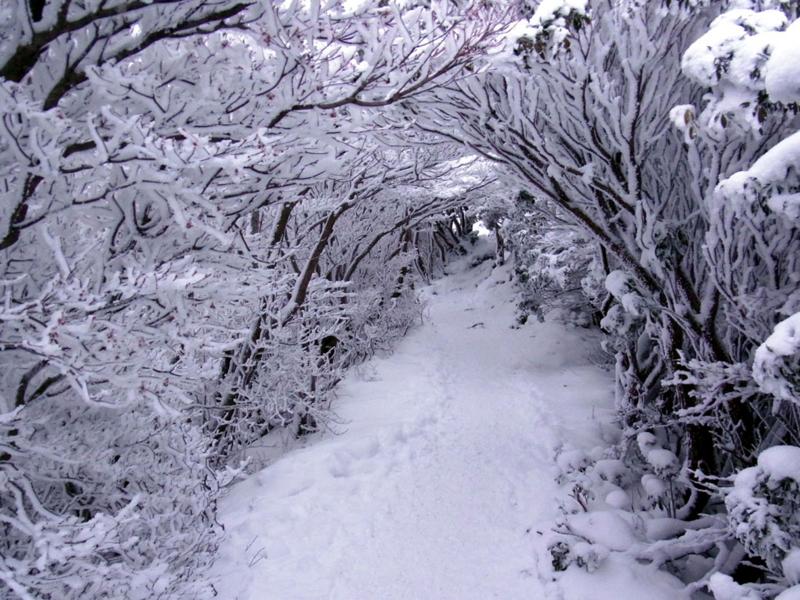 白い一日の画像