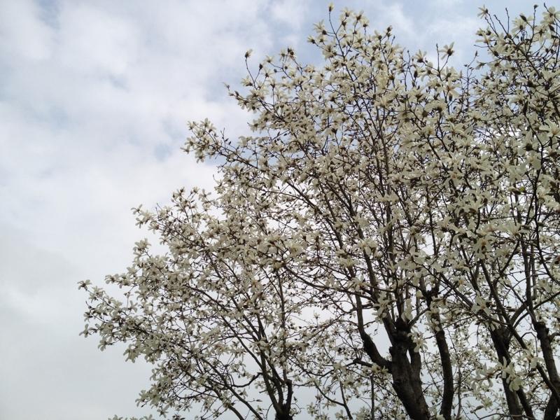 春がやってきたの画像