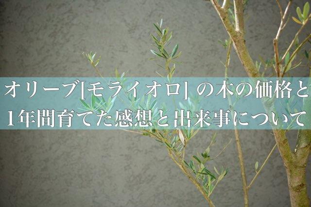 f:id:mae3:20201116221319j:plain