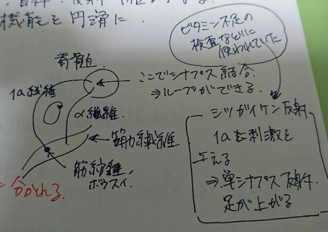 f:id:maekawa_yoshimiki_1119:20170516004822j:image