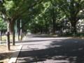 うららかな午後の並木道