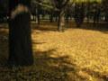 銀杏(いちょう)の絨毯