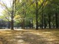 太陽が照る森