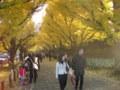 銀杏(いちょう)並木4