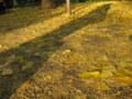 銀杏(いちょう)並木5