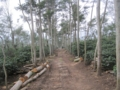 ジャワコーヒー(アラビカ種)の農園(東ジャワ州,インドネシア)