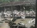 多過ぎ?(スラバヤ動物園,東ジャワ州,インドネシア)