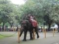 スラバヤ動物園(スラバヤ,東ジャワ州,インドネシア)