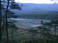 イジェン盆地の水田(東ジャワ州,インドネシア)