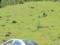 カナダのクマ(バンフ国立公園,アルバータ州,カナダ)