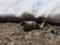カナダのプレーリードッグ(コロンビアジリス)(ウィスラー,BC,カナダ)