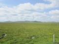 若爾蓋の草原(中国四川省アバ自治州若爾蓋県)