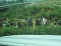 烏沙の朝市,自然渋滞でバスが3時間止まる(怒(中国貴州省興義市)