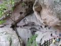 八角寨風景区の遊歩道(中国広西チワン族自治区桂林市資源県)