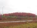 垂水ジャンクションの紅葉(兵庫県神戸市垂水区名谷町)