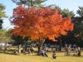 奈良公園の橙色(奈良県奈良市)