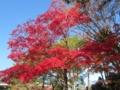 奈良公園の赤色(奈良県奈良市)