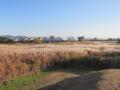 平城宮跡周辺のススキ草原(奈良県奈良市)