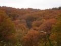生駒山鳴川峠周辺の紅葉(奈良県)