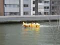 OSAKA光のルネサンス,光の水都ルネサンスクルーズ(大阪市北区)