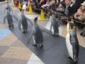 海遊館のペンギンパレード(大阪府大阪市港区)