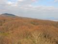鐘の鳴る展望台からの生駒山南東斜面の落葉(奈良県)