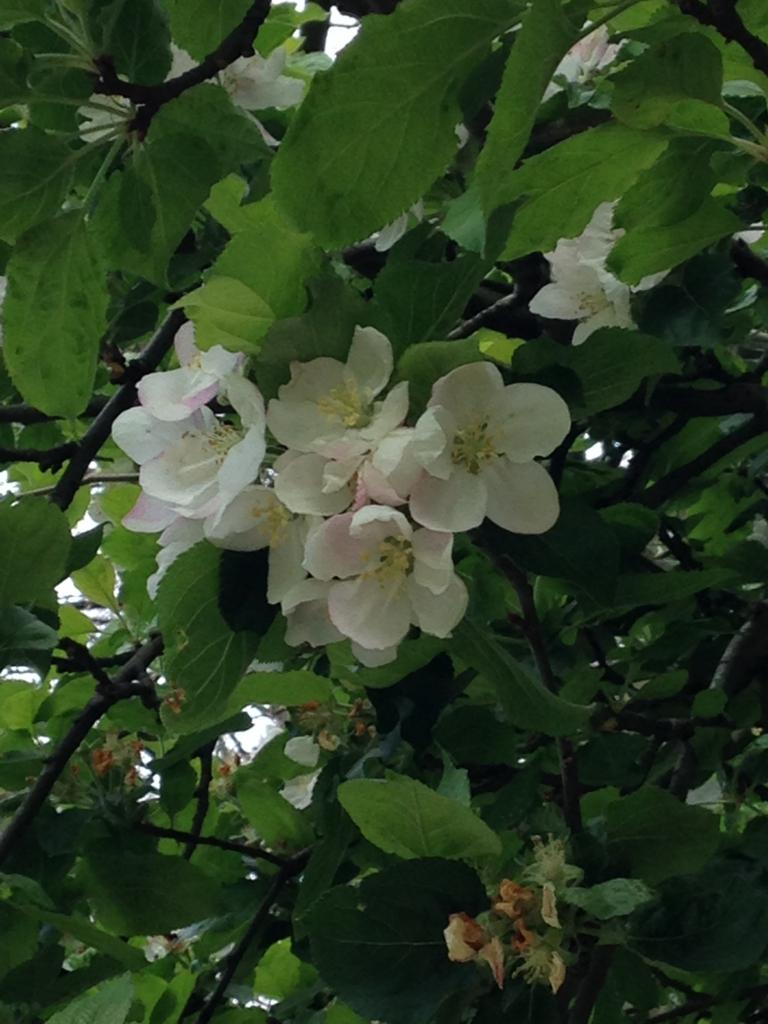 f:id:magnoliask:20170430034914j:plain