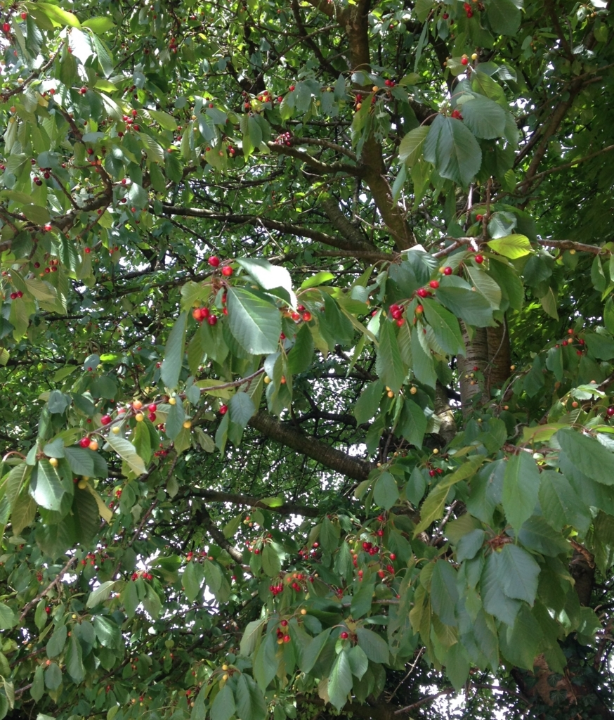 f:id:magnoliask:20170613073430j:plain