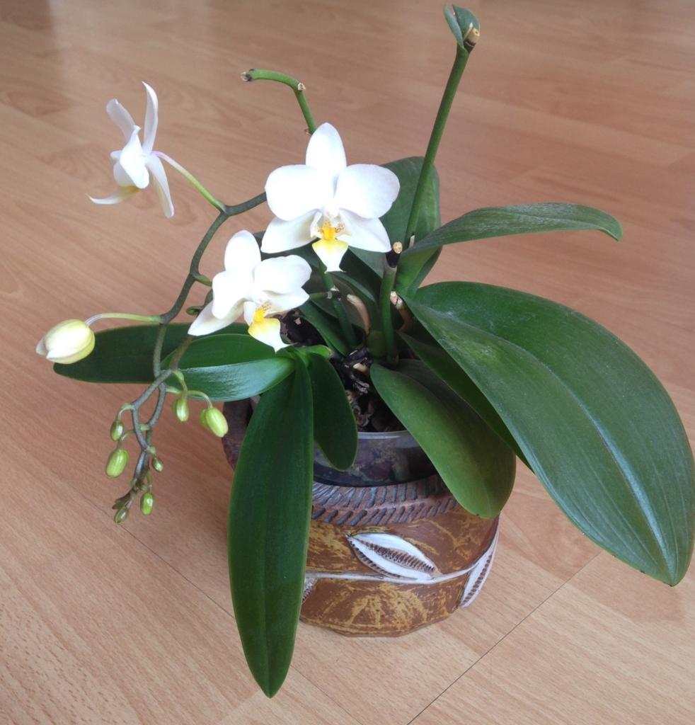 f:id:magnoliask:20170613073743j:plain