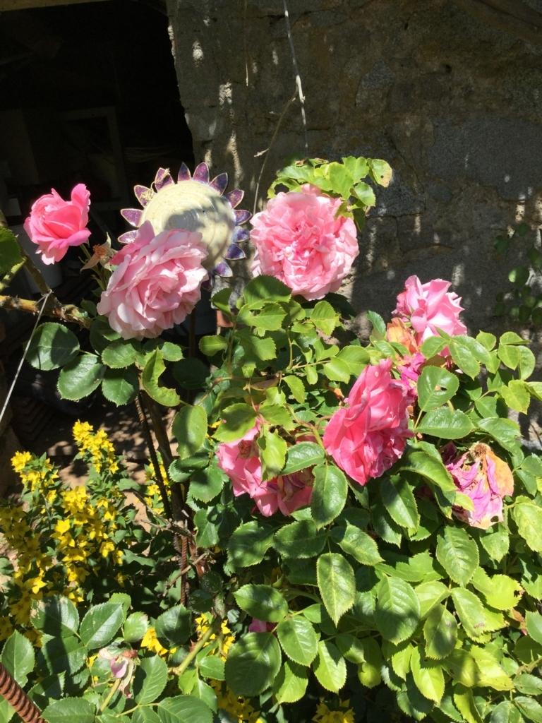 f:id:magnoliask:20170619222157j:plain