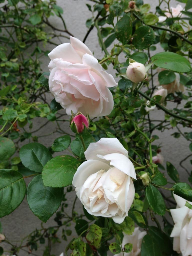 f:id:magnoliask:20170702013910j:plain