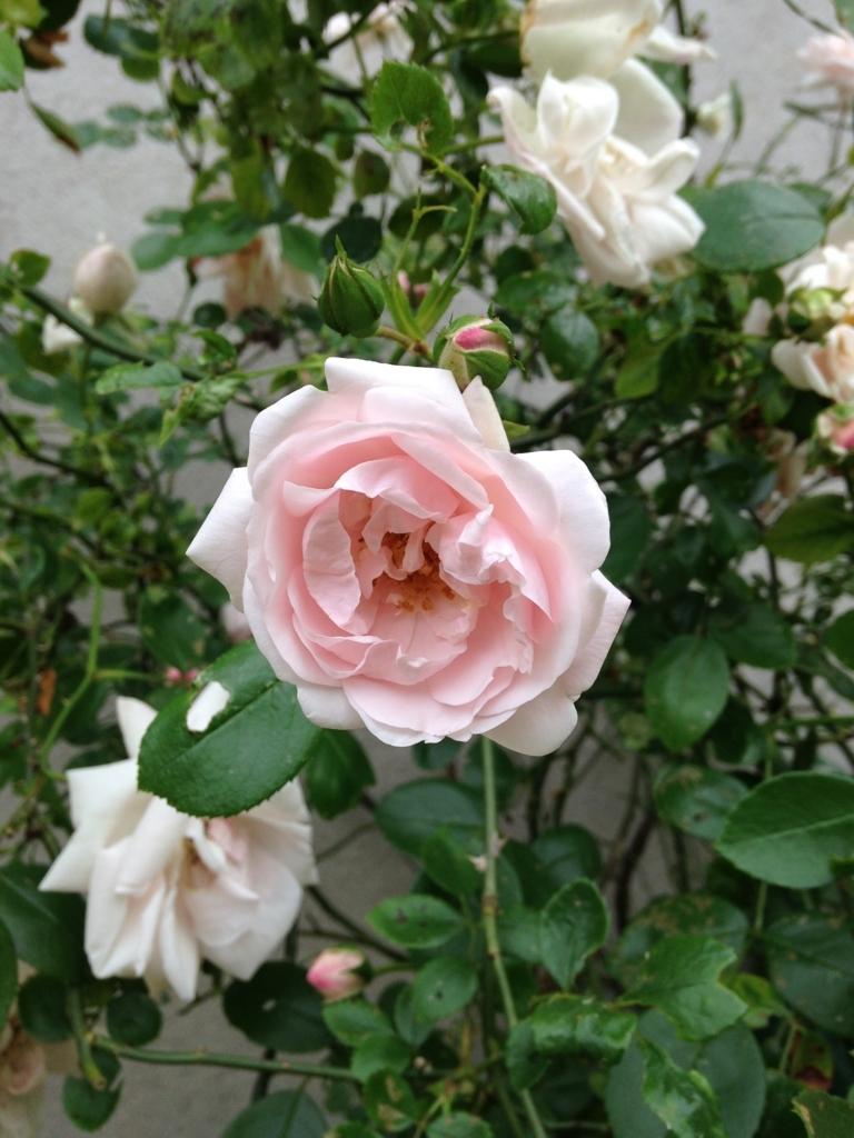 f:id:magnoliask:20170702013949j:plain