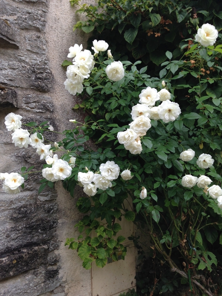 f:id:magnoliask:20170907001950j:plain