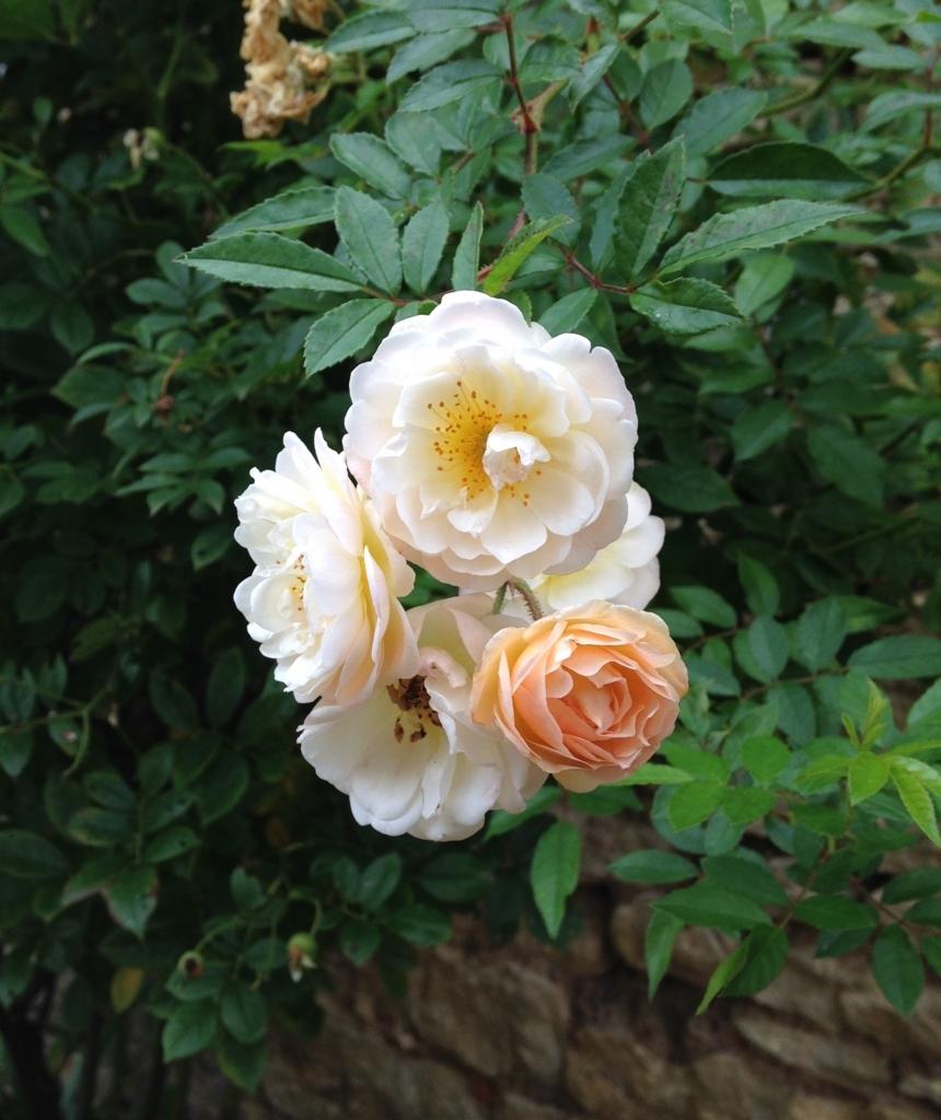 f:id:magnoliask:20170907002028j:plain