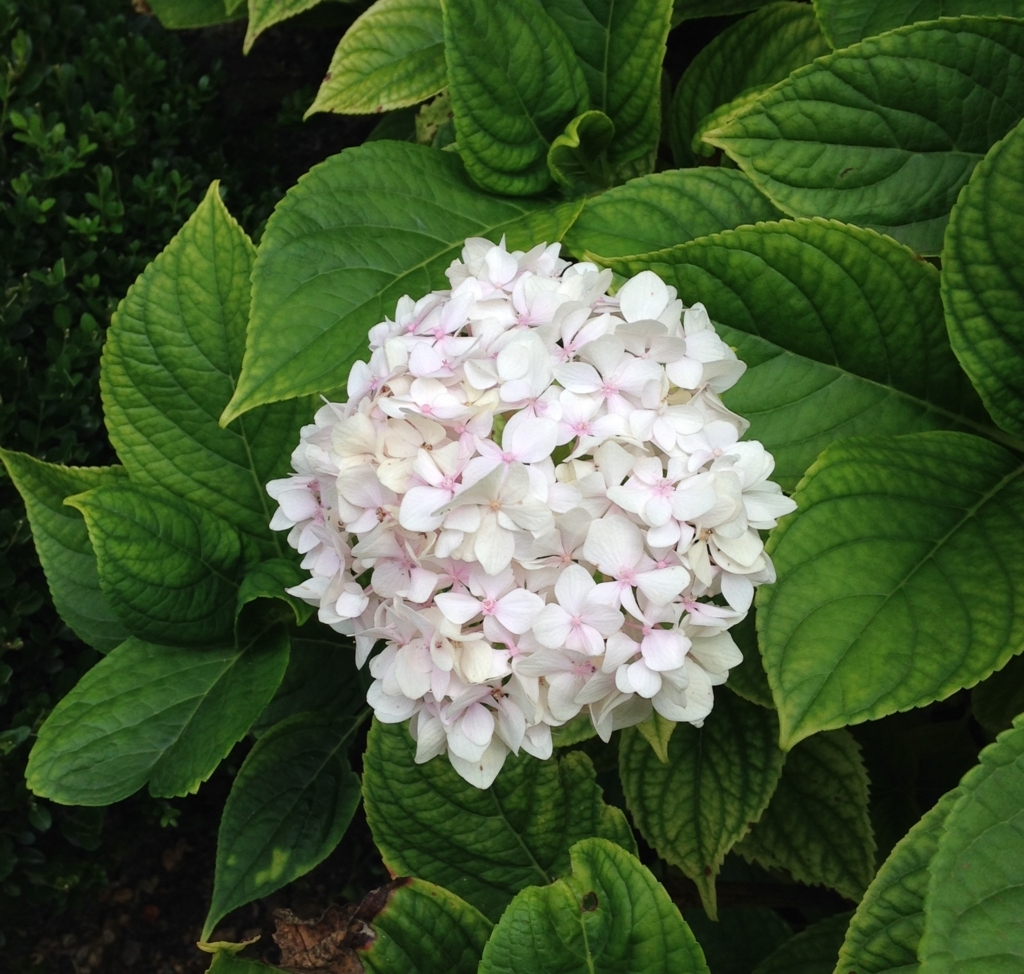 f:id:magnoliask:20170907002759j:plain