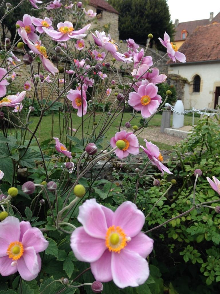f:id:magnoliask:20170907002850j:plain