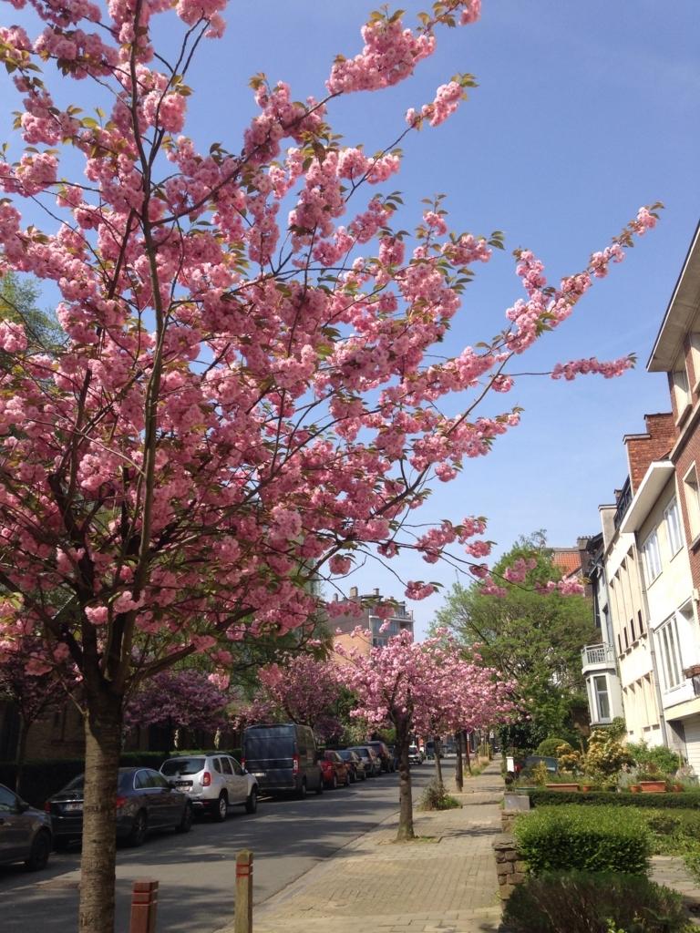 f:id:magnoliask:20180422230725j:plain