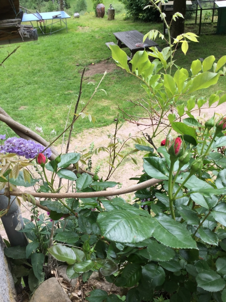 f:id:magnoliask:20180528190955j:plain