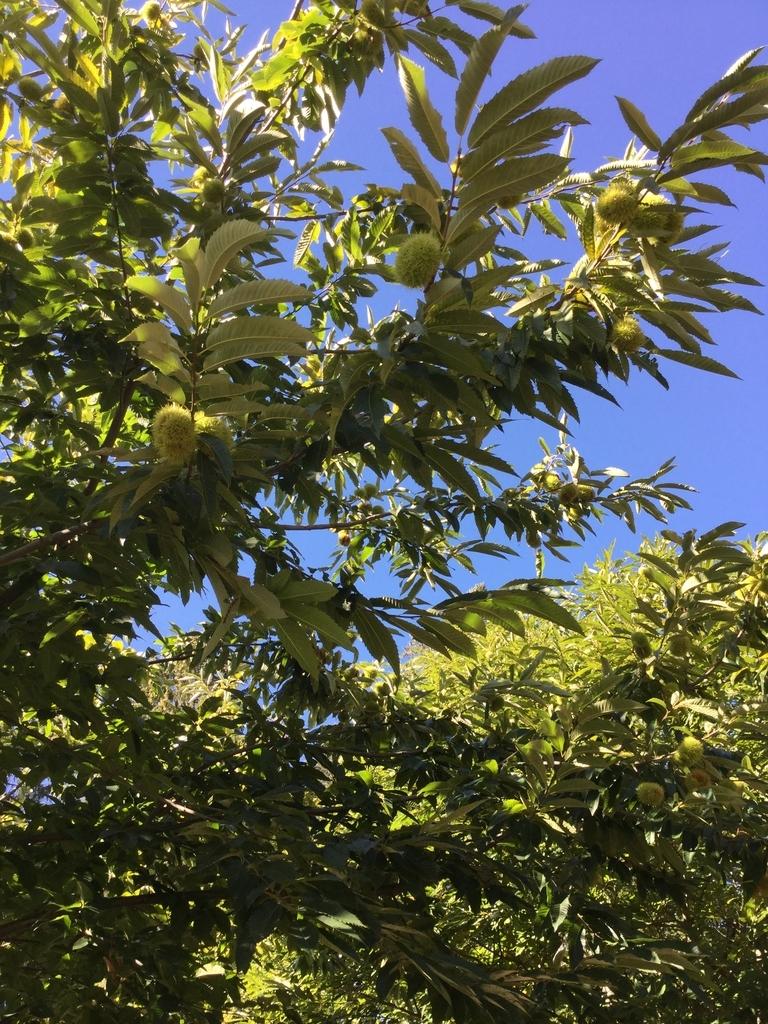 f:id:magnoliask:20180927182527j:plain