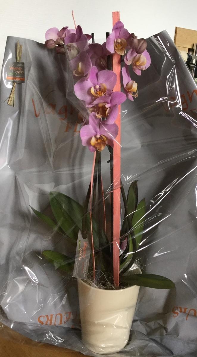 f:id:magnoliask:20190613185542j:plain
