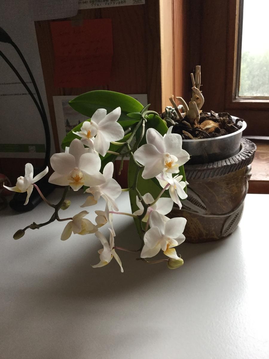 f:id:magnoliask:20190729221828j:plain