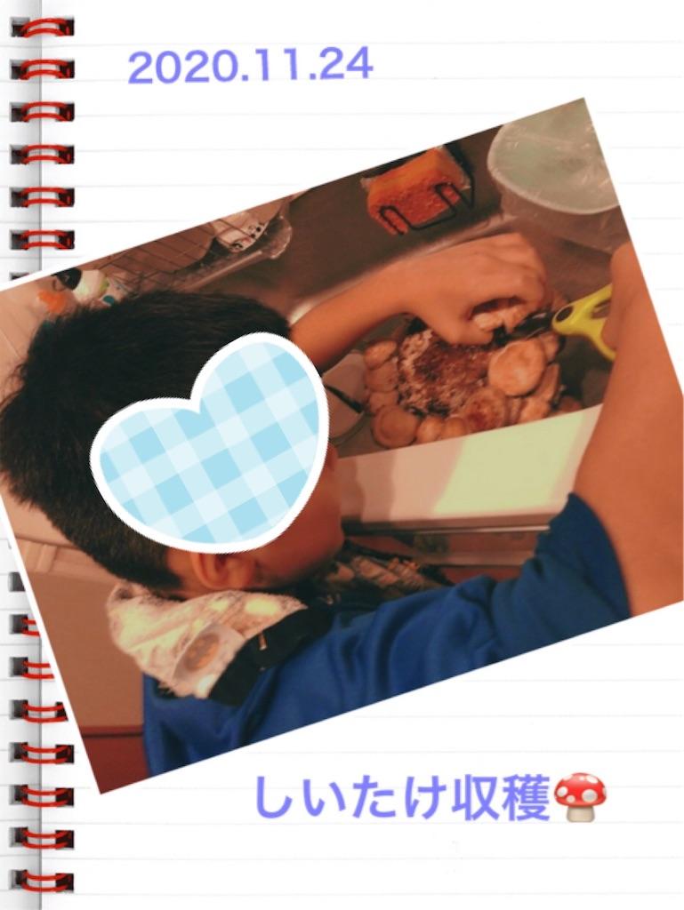 f:id:mago3-musume2:20201125213635j:image
