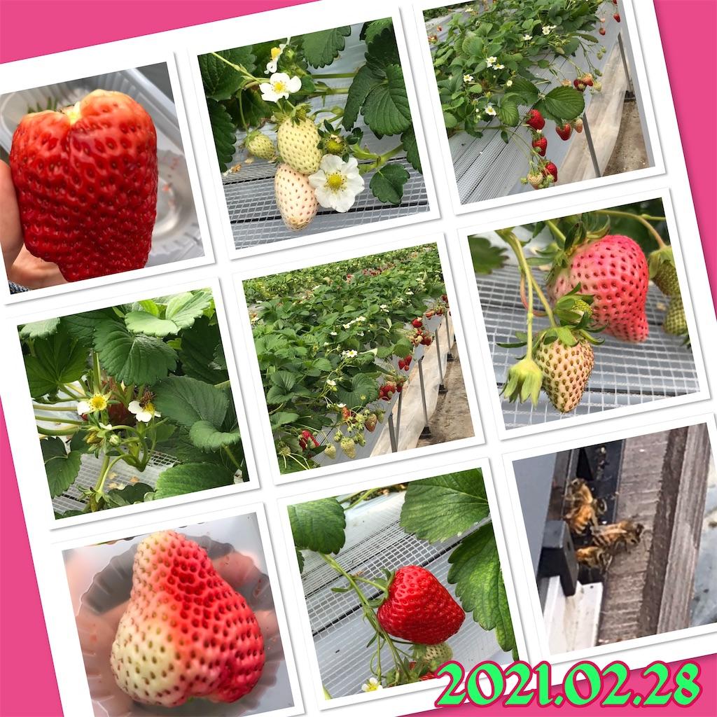 f:id:mago3-musume2:20210228224216j:image