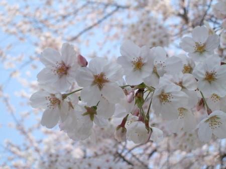 f:id:maguro1958:20080329135422j:image