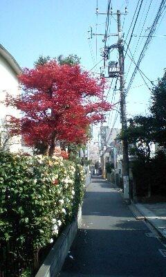f:id:maguro1958:20080403134220j:image