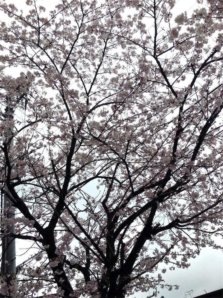 f:id:magurochiru:20170409174429j:image