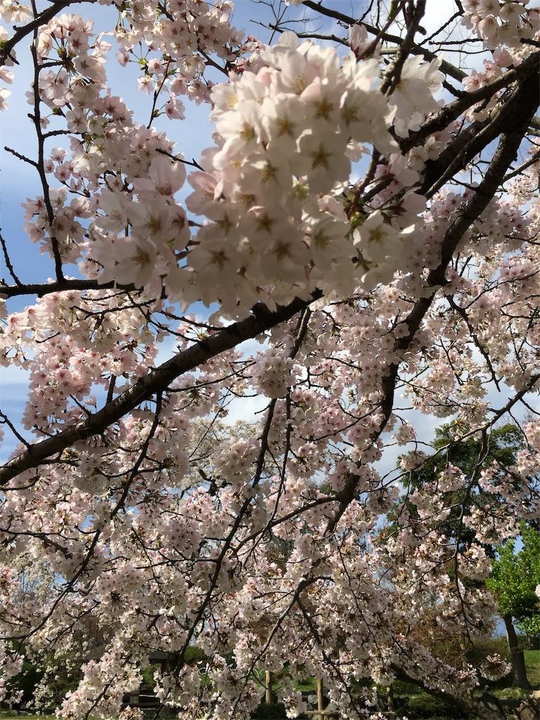f:id:magurochiru:20170415010910j:image