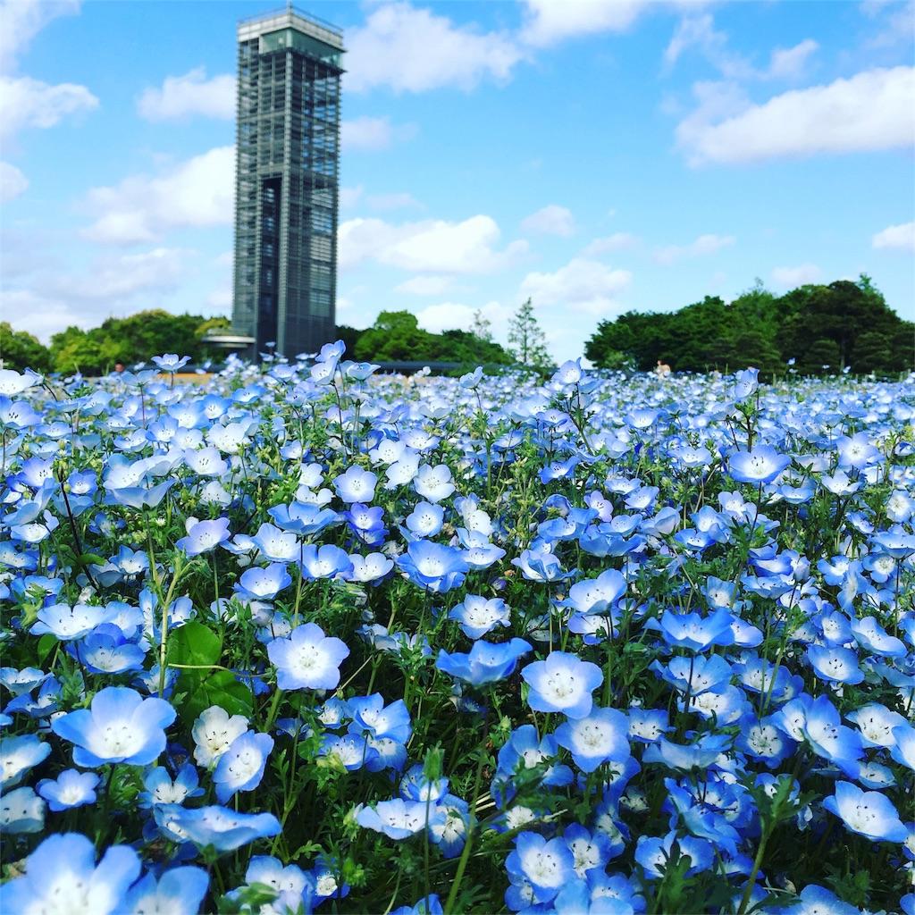 f:id:magurochiru:20170505235014j:image